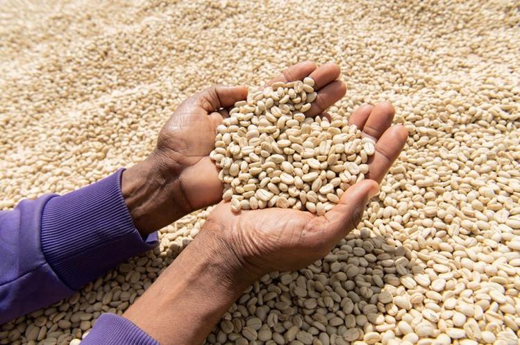 4234_2019-01-23T155608Z_1_LYNXNPEF0M1DQ-OUSTC_RTROPTP_3_TECH-US-UGANDA-COFFEE