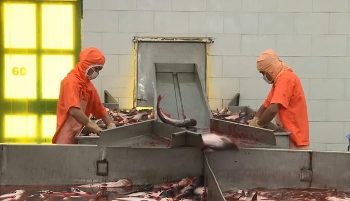 Xuất khẩu qua Mỹ giảm, cá tra tìm đường sang EU - Ảnh 1.