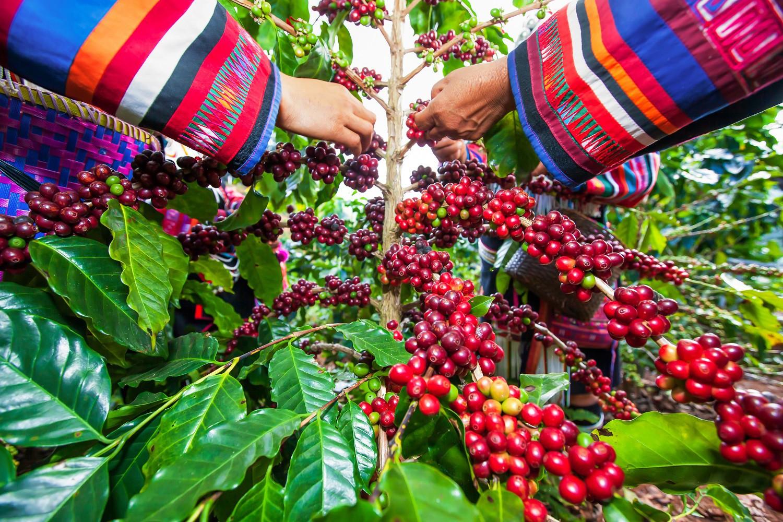 Sức nóng hiện tại của cà phê Việt Nam - Ảnh 2.