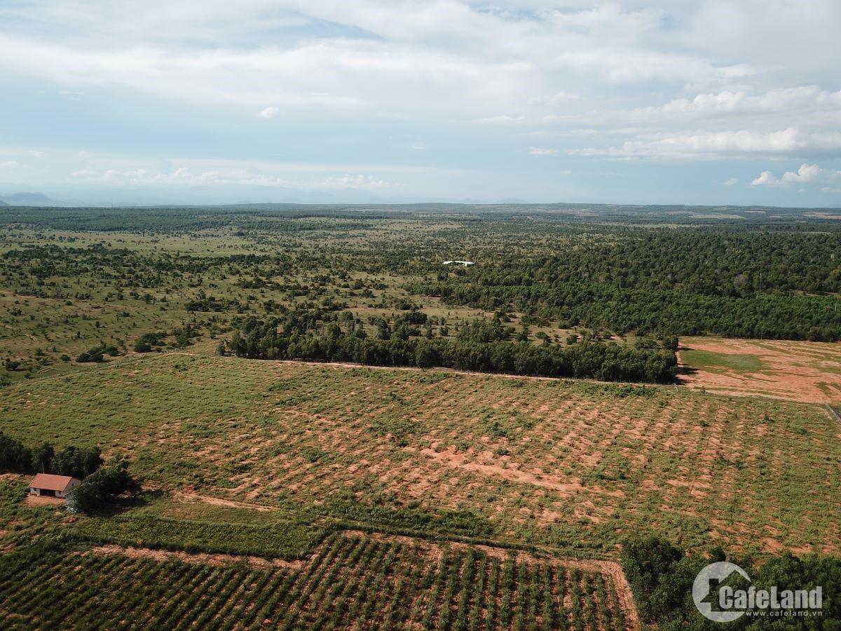 Đất sân bay Phan Thiết: Cò đất ôm tiền tỉ, người dân ngậm ngùi - Ảnh 3.