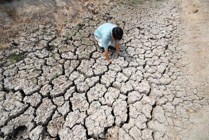 ĐBSCL: Hạn mặn sớm đe dọa hàng trăm ngàn ha lúa - Ảnh 1.