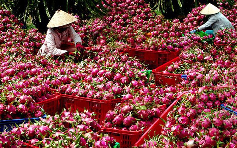 Trái cây Việt Nam đã đủ sức thâm nhập nhiều thị trường khó tính - Ảnh 1.