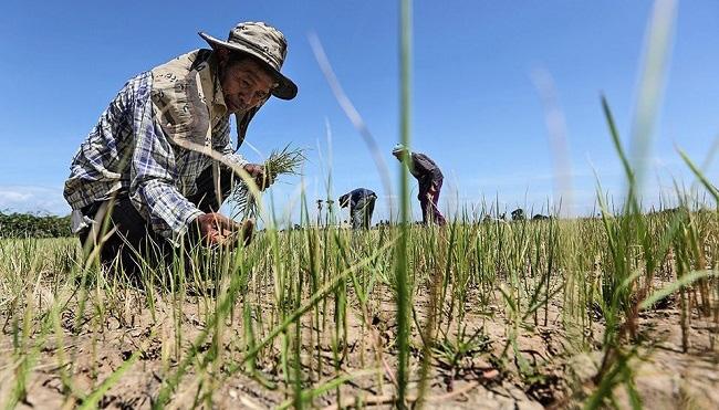 Thái Lan lên kịch bản đối phó khủng hoảng thiếu nước - Ảnh 2.