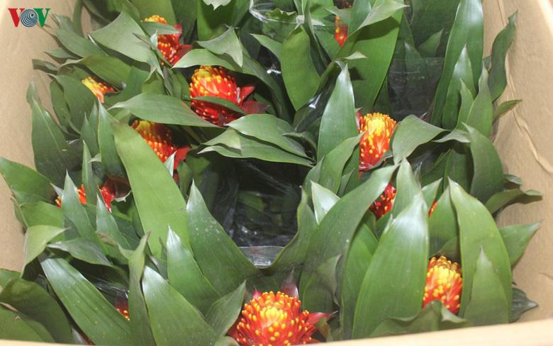 Những loại hoa, cây cảnh 'khuynh đảo' thị trường Tết Canh Tý 2020 - Ảnh 6.