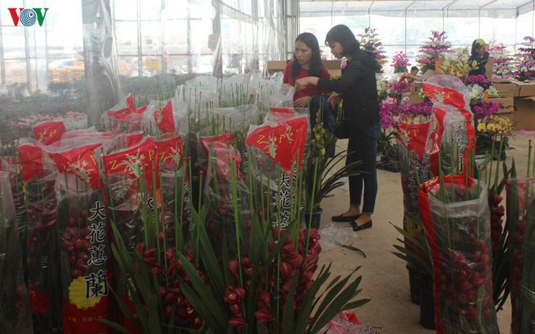 Những loại hoa, cây cảnh 'khuynh đảo' thị trường Tết Canh Tý 2020 - Ảnh 8.