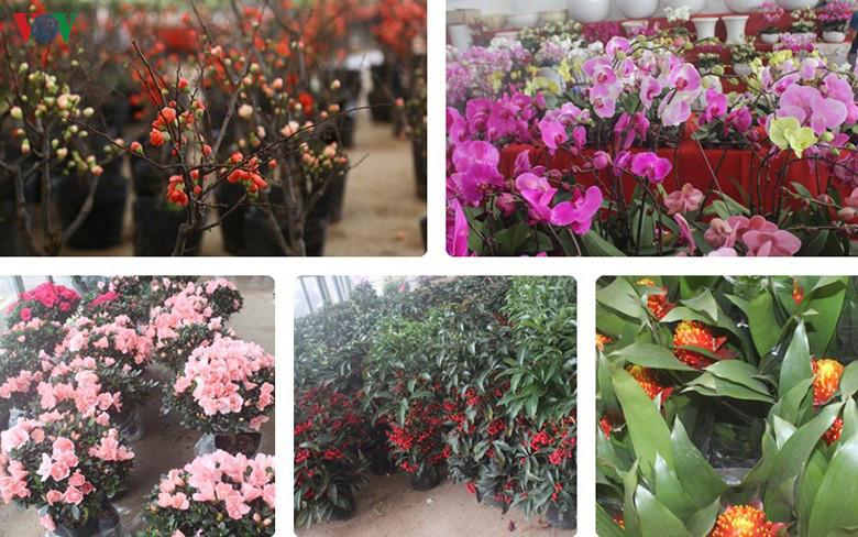Những loại hoa, cây cảnh 'khuynh đảo' thị trường Tết Canh Tý 2020 - Ảnh 1.