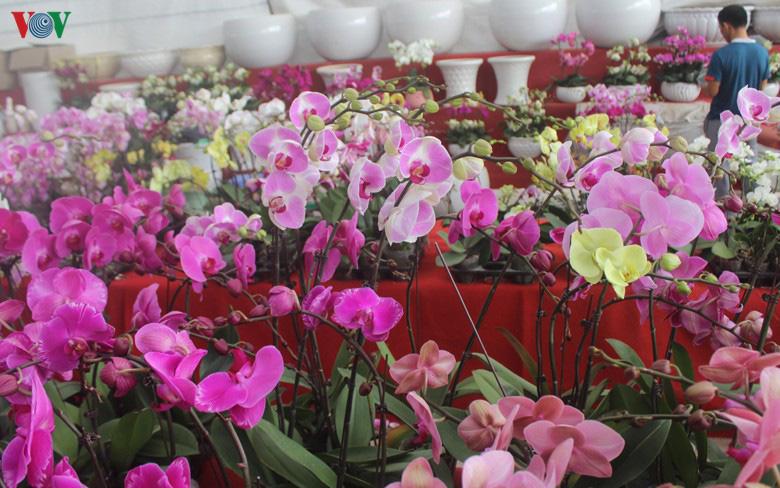 Những loại hoa, cây cảnh 'khuynh đảo' thị trường Tết Canh Tý 2020 - Ảnh 9.