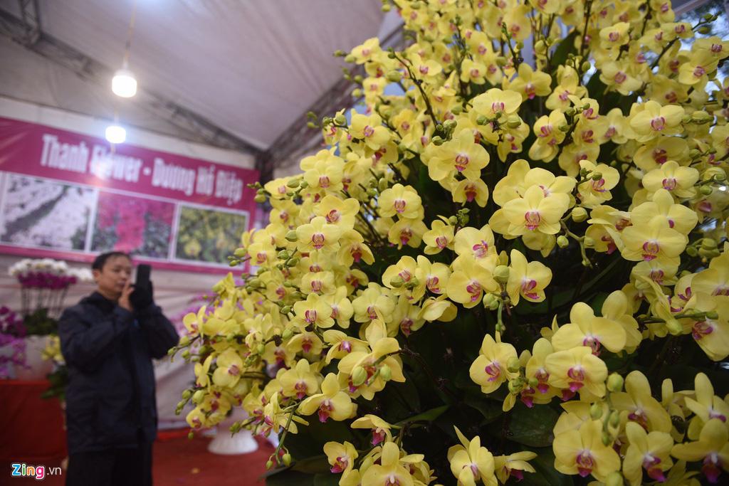 Lan hồ điệp 346 cây, giá 106 triệu cho Tết Canh Tý - Ảnh 11.