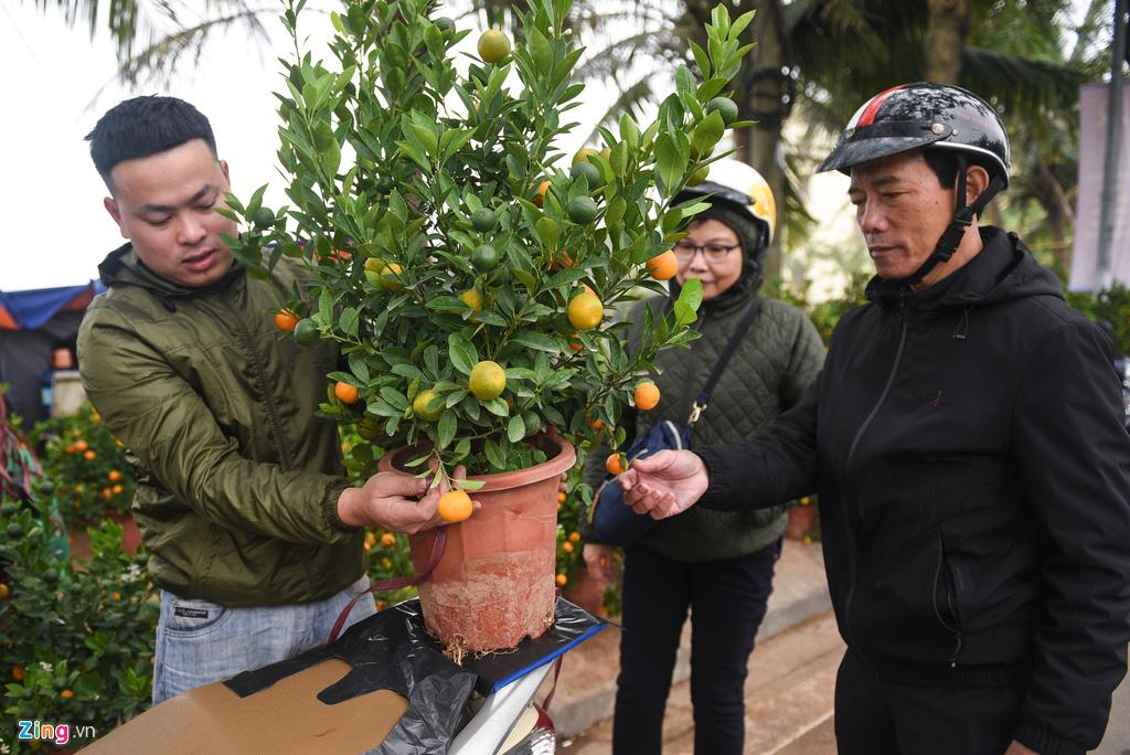 Lan hồ điệp 346 cây, giá 106 triệu cho Tết Canh Tý - Ảnh 8.