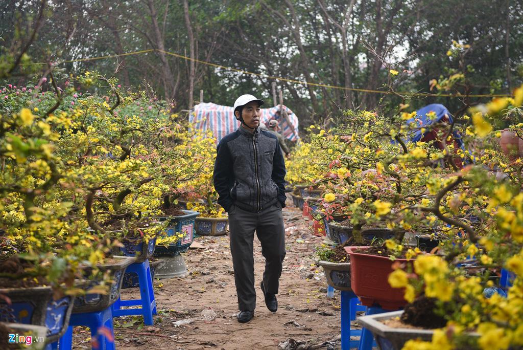 Lan hồ điệp 346 cây, giá 106 triệu cho Tết Canh Tý - Ảnh 5.