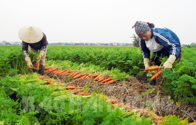 Mỗi năm chia nhau gần 6.000 tỉ, làng tỉ phú hiếm có Việt Nam - Ảnh 2.