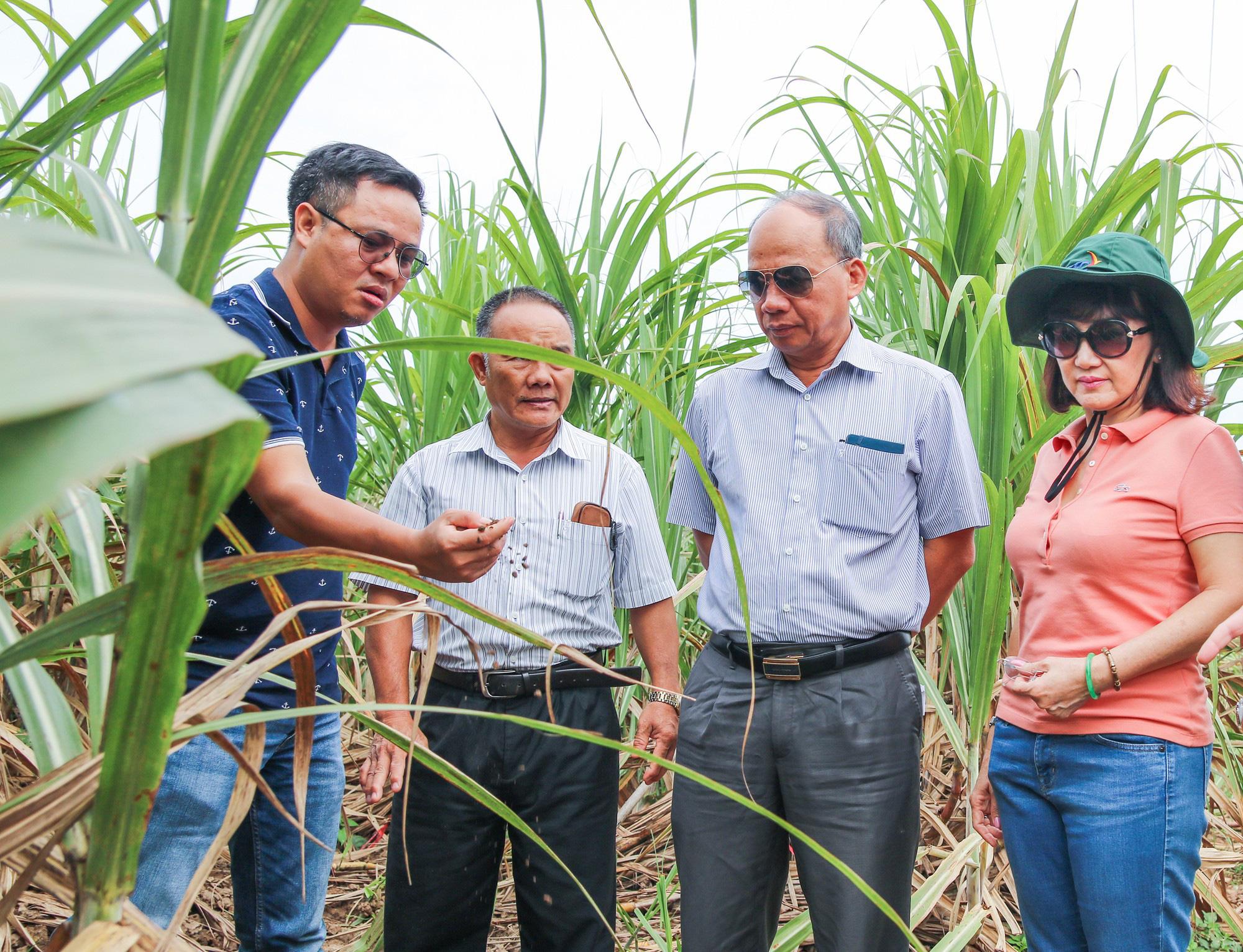 Tăng đầu tư vào tài sản cố định và góp vốn, dòng tiền thuần của TTC Sugar âm hơn 440 tỉ đồng sau nửa năm - Ảnh 1.