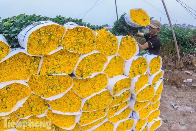 Làng hoa Tây Tựu tất bật chuẩn bị cho Tết - Ảnh 11.