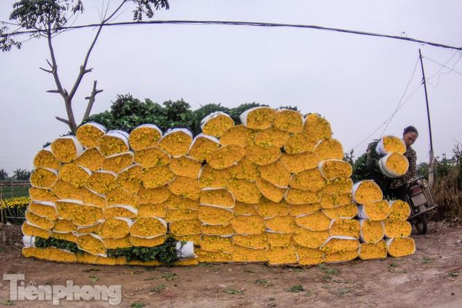 Làng hoa Tây Tựu tất bật chuẩn bị cho Tết - Ảnh 7.