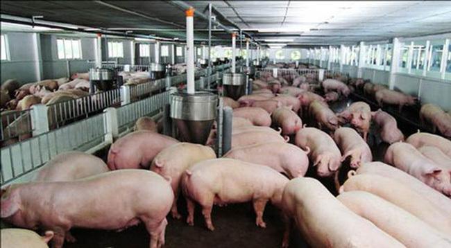 Bộ trưởng yêu cầu, phải giảm giá thịt lợn ngay lập tức - Ảnh 2.
