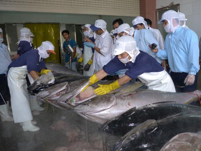 Xuất khẩu cá ngừ gặp khó về nguyên liệu do dịch Covid-19 - Ảnh 1.
