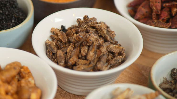 Các nhà hàng đã mời khách ăn đạm côn trùng thế nào - Ảnh 1.