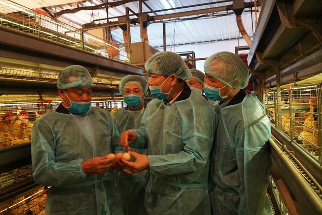 Doanh nghiệp chăn nuôi đồng loạt giảm giá thịt lợn hơi còn 75.000 đồng/kg - Ảnh 1.