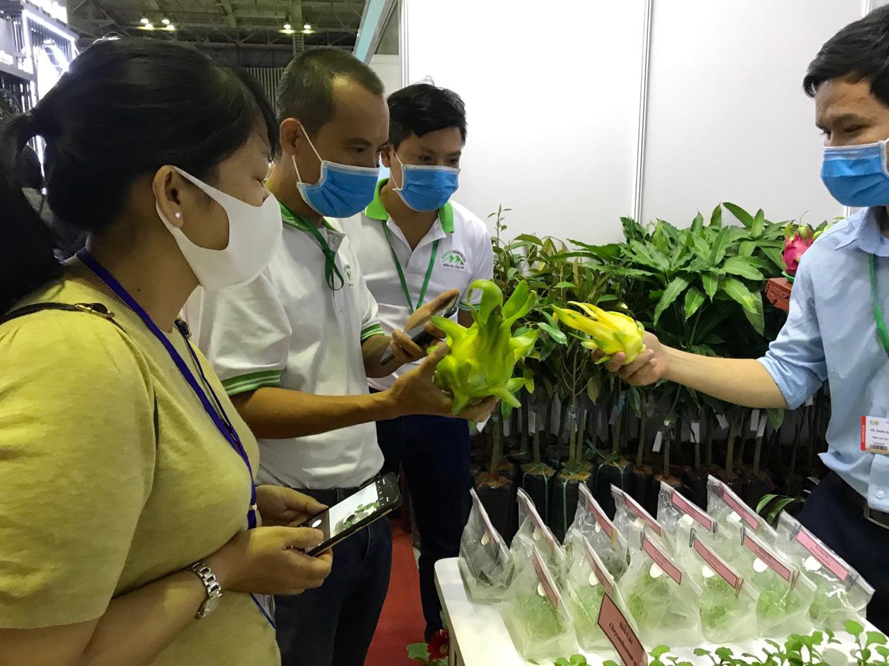 Đẩy mạnh xuất khẩu rau quả sang Thái Lan, Mỹ, EU…để giảm áp lực thị trường Trung Quốc bị ngưng trệ do dịch Covid-19 - Ảnh 5.