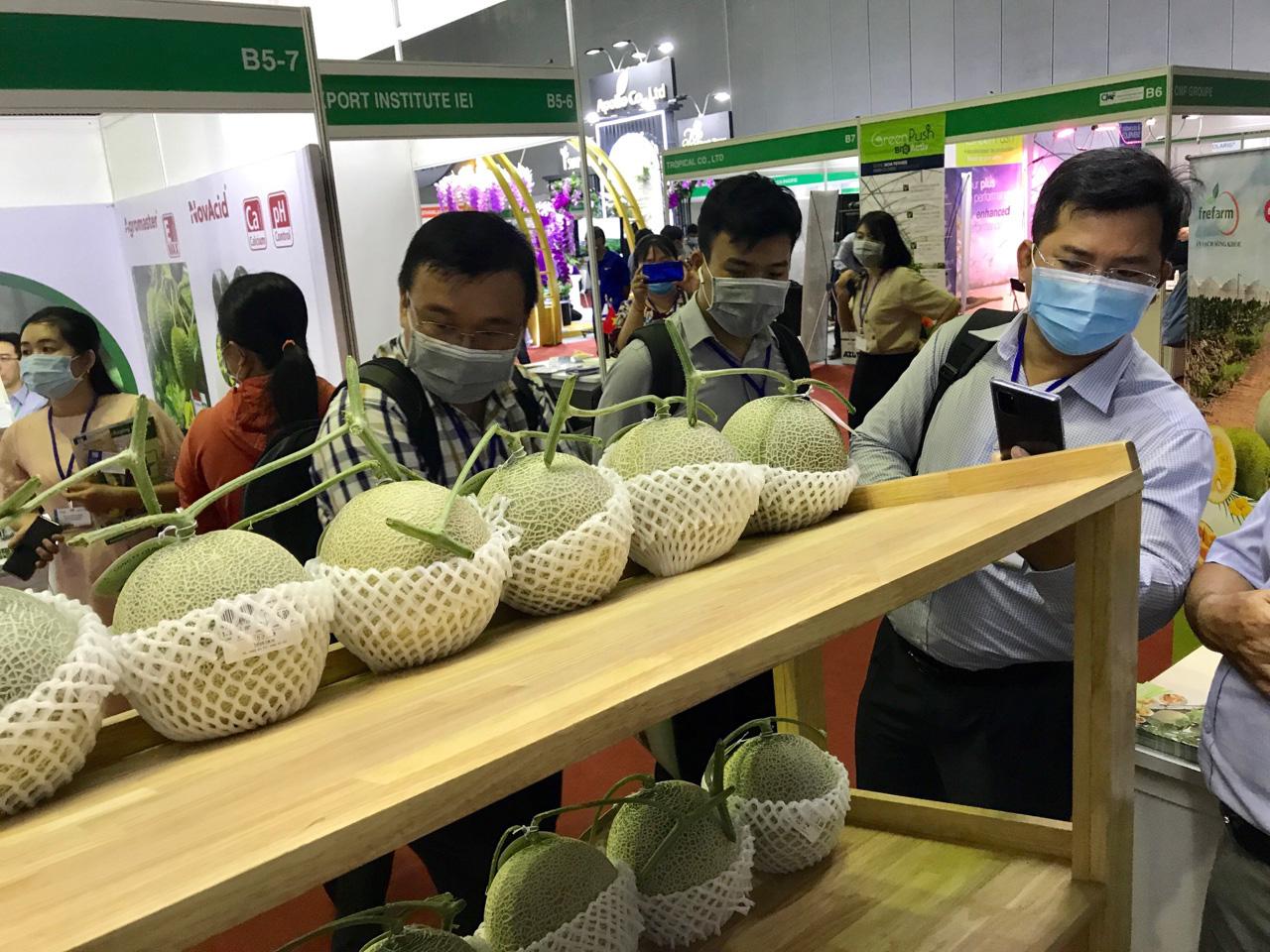 Đẩy mạnh xuất khẩu rau quả sang Thái Lan, Mỹ, EU…để giảm áp lực thị trường Trung Quốc bị ngưng trệ do dịch Covid-19 - Ảnh 2.