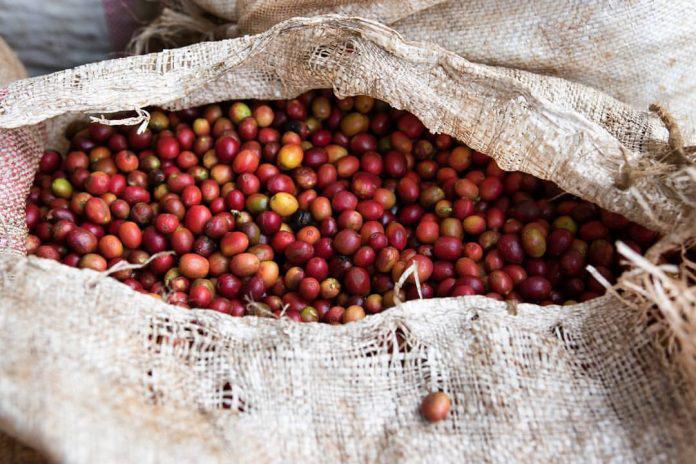 Chiến lược thúc đẩy sản xuất cà phê Kenya - Ảnh 1.