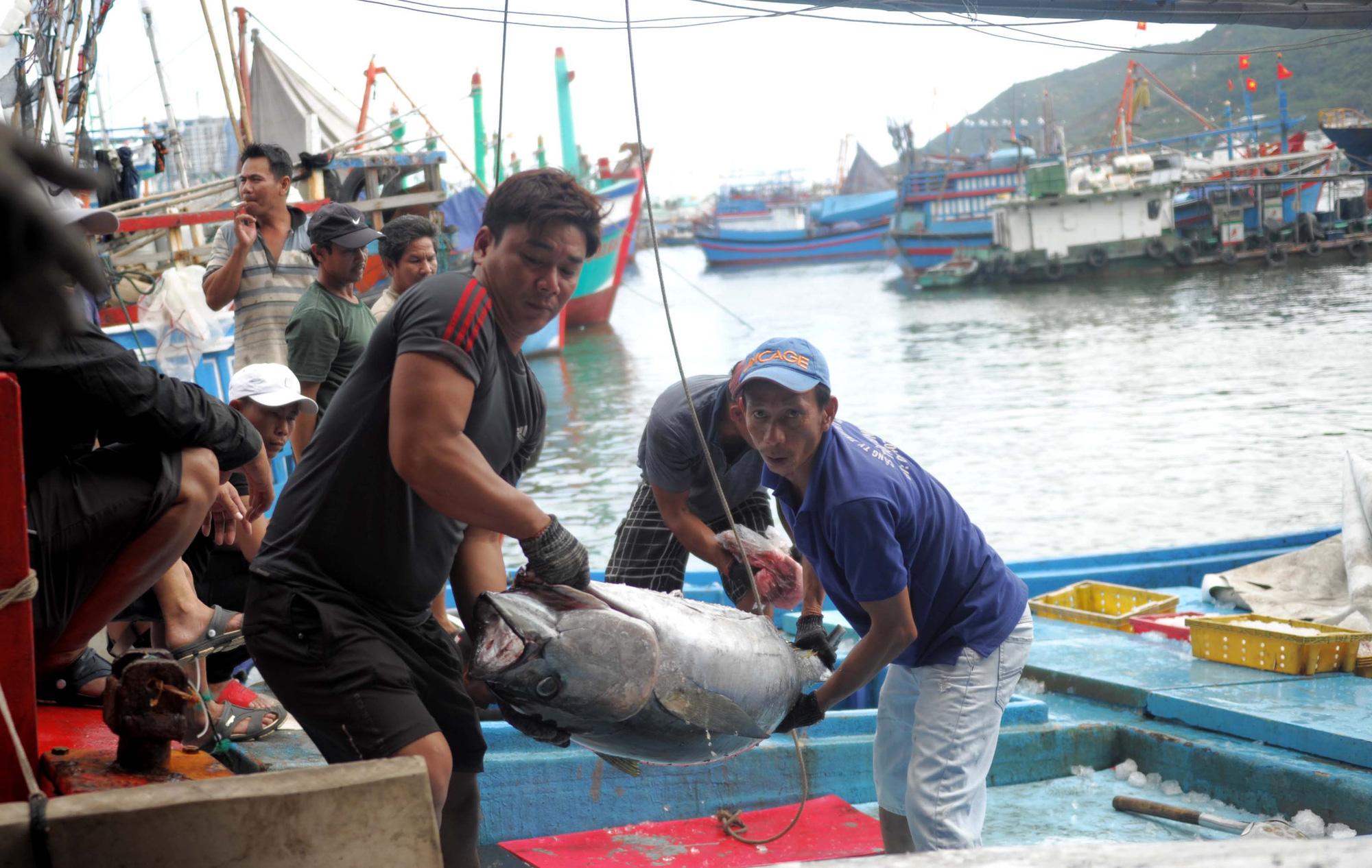 Khánh Hòa: Giá cá ngừ đại dương đạt 110.000 đồng/kg giữa dịch virus corona - Ảnh 1.