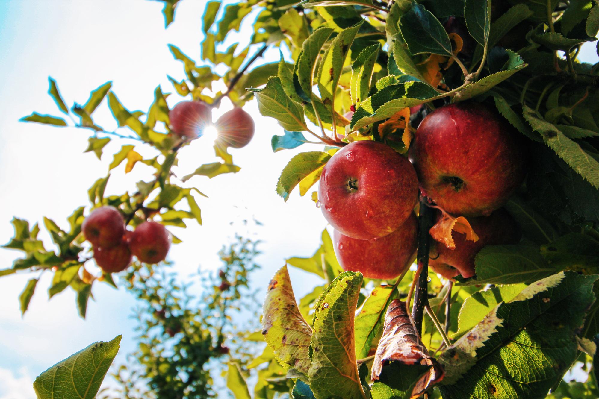 EU có nhu cầu cao về sản phẩm rau quả từ các nước đang phát triển - Ảnh 1.