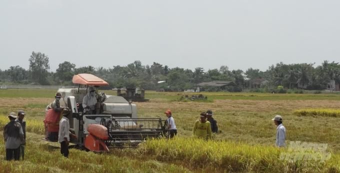 Sôi sục thị trường lúa gạo - Ảnh 1.