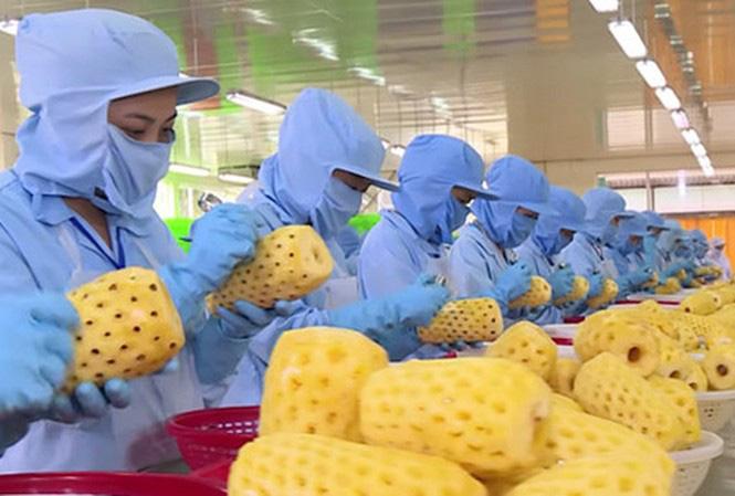 Xuất khẩu nông sản sang Trung Quốc ấm dần sau cao điểm dịch COVID-19 ở Vũ Hán - Ảnh 1.