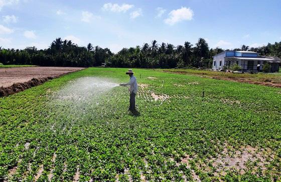 Chuyển 50.000ha đất lúa bị hạn mặn sang trồng cây con khác - Ảnh 1.
