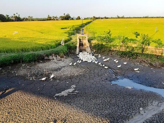 Chuyển 50.000ha đất lúa bị hạn mặn sang trồng cây con khác - Ảnh 2.