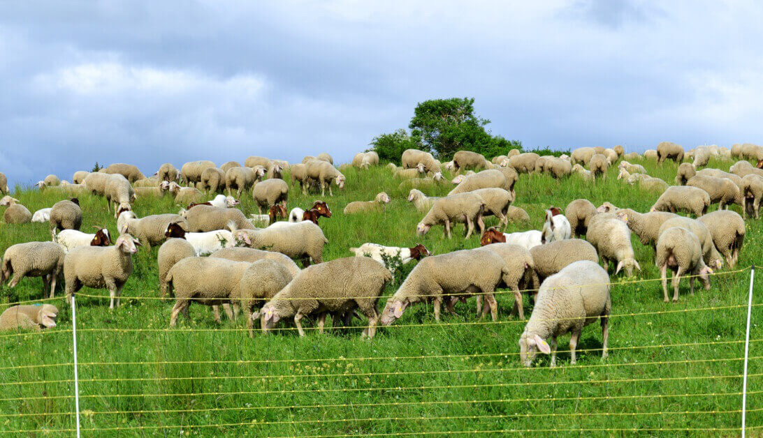 Triển vọng hợp tác ngành nông nghiệp giữa Việt Nam và Áo - Ảnh 1.
