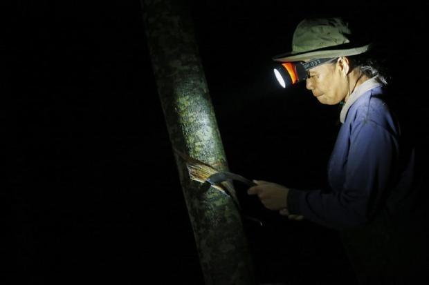 thai lan indonesia va malaysia se giam san luong cao su xuat khau tu thang 8