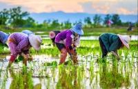 dong nam a doi mat voi rui ro tang truong trong nam 2019