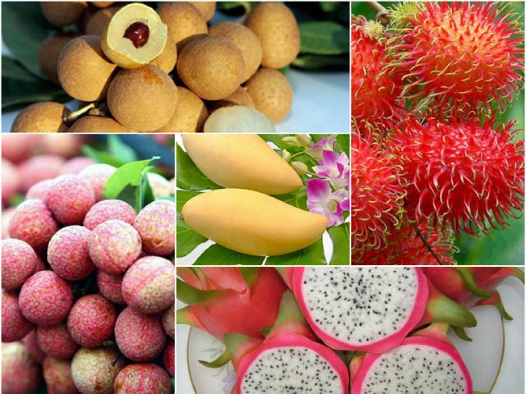 Xuất khẩu trái cây Việt Nam: Tiềm năng lớn nhưng cũng không ít rào cản