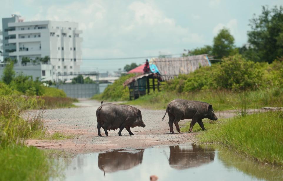 long dong so phan nhung du an van thinh phat thau tom