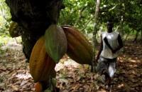philippines voi tham vong tro thanh sieu cuong quoc cacao