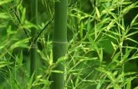 bamboo capital dong tho du an king crown village 1400 ti dong